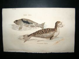 Brightly 1811 Antique Hand Col Print. Harp & Common Seal